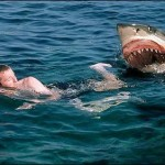 Shark Attacks Spark Kill Orders (Australia)