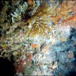 Australian Scientists Discover Deep Sea Corals